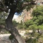 Klettern in Buchi Arta