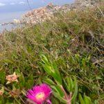 Natur Sardinien